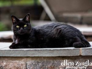 Ellen|Zangla|Photography|Cat|Photo|Picture|Loudoun|Fairfax|Tysons|Middleburg|Leesburg|Ashburn|Reston|Washington DC|Bethesda|Potomac|Rockville|Vienna