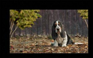 Ellen Zangla Photography Dog Puppy Photo Picture Loudoun Fairfax Washington DC  Leesburg Ashburn Middleburg  Reston Tysons Corner Vienna Alexandria Bethesda Potomac Rockville