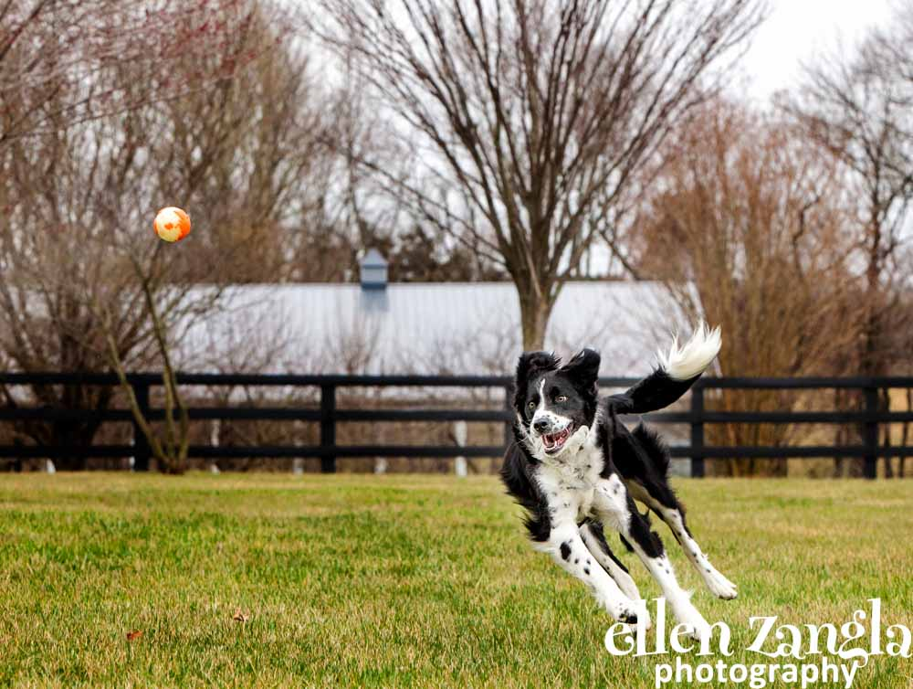 Ellen|Zangla|Photography|Dog|Puppy|Photo|Picture|Loudoun|Fairfax|Washington DC| Leesburg|Ashburn|Middleburg| Reston|Tysons Corner|Vienna|Alexandria|Bethesda|Potomac|Rockville
