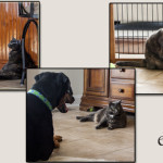 Pet Photography, Dog Pictures, Dog Photographs, Cat Pictures, Cat Photographs