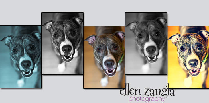 Leesburg Dog Photography, Purcellville Dog Photos, Purcellville Dog Photograpy