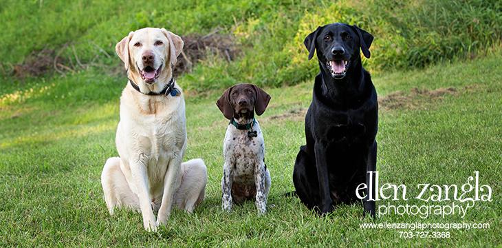 Leesburg Pet Photography, Leesburg Dog Photos, Leesburg Dog Photography, Leesburg Dog Pictures, Loudoun County Dog Photography, Loudoun County Dog Photos, Loudoun County Dog Pictures