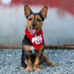 Dog photos Fairfax VA