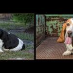 Loudoun County Dog Photos