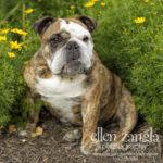 Leesburg Dog Photography