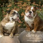 Fairfax Dog Photography