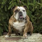 Dog photography Loudoun County VA