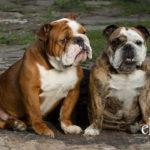 Loudoun County Dog Photography