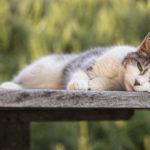 Cat photography, Fairfax VA