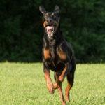 Action dog photogaphy Fairfax VA