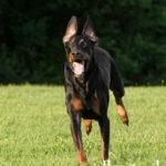 Action dog photos Fairfax VA