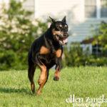 Action dog photos Ashburn VA