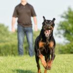 Action dog photography Fairfax VA
