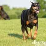 Dog photos Leesburg VA