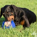 Dog photos McLean VA