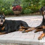 Dog photos Ashburn VA