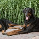 Dog photography northern VA