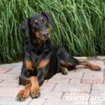 Dog photography Washington DC