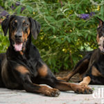 Dog photography Reston VA