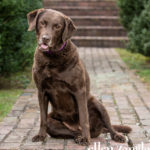 Dog photography Middleburg VA