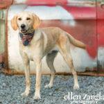 Dog photography Ashburn VA