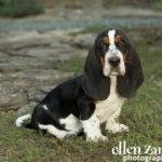 Puppy photography Middleburg VA