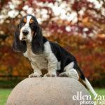 Puppy photography Fairfax VA