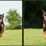 Action dog photos Fairfax A