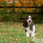 Puppy photography Leesburg VA