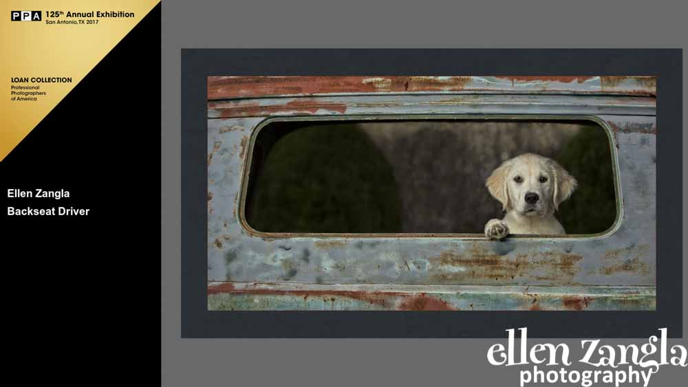 Ellen|Zangla|Photography|Puppy|Photo|Loudoun|Fairfax|Washington DC|Leesburg|Middleburg|Ashburn|Reston