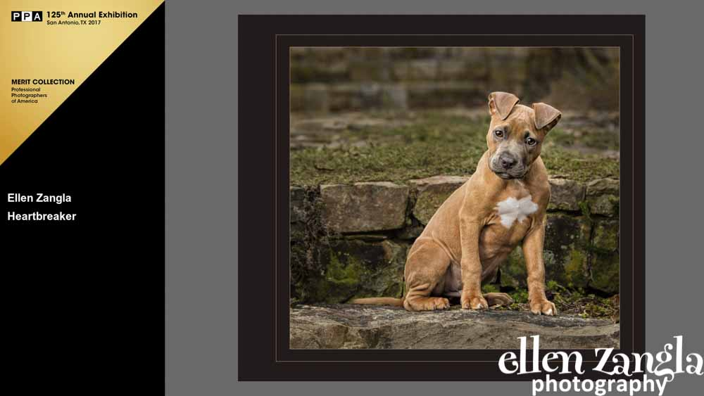 Ellen|Zangla|Photography|Puppy|Photo|Pet|Leesburg|Ashburn|Reston|Middleburg|Fairfax|Washington DCurg|