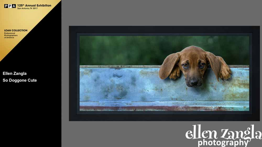 Ellen|Zangla|Photography|Puppy|Photo|Loudoun|Fairfax|Washington DC|Leesburg|Ashburn|Middleburg|Reston