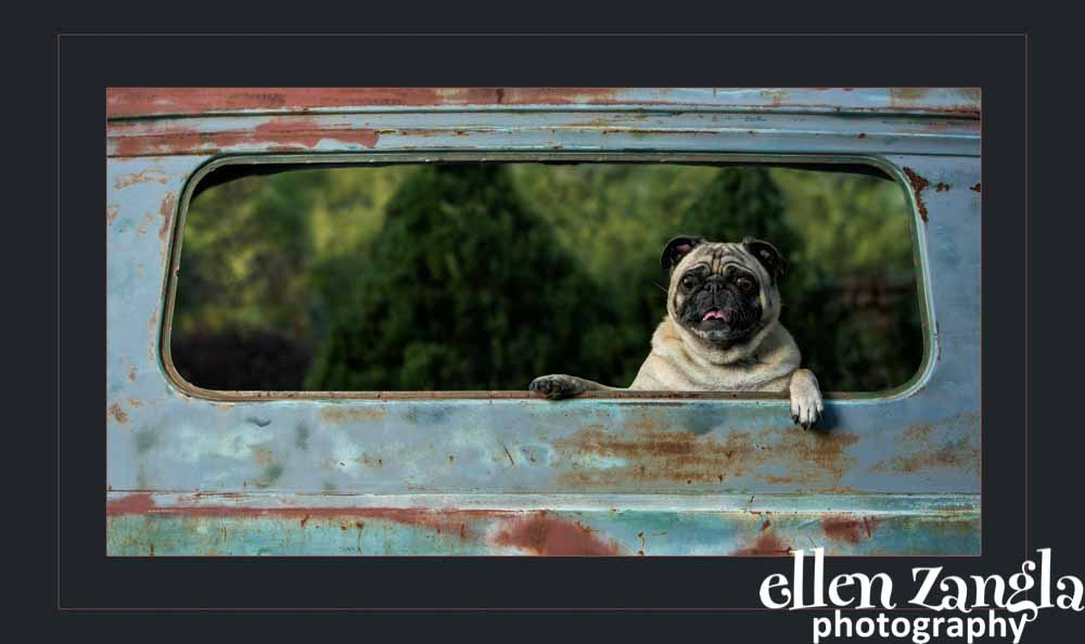 Ellen Zangla Photography, Dog Photographer, Loudoun County