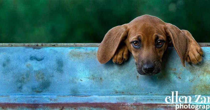 Ellen|Zangla|Photography|Dog|Puppy|Photo|Picture|Loudoun|Fairfax|Washington DC| Leesburg|Ashburn|Middleburg| Reston|Tysons Corner|Vienna|Alexandria|Bethesda|Potomac|Rockville