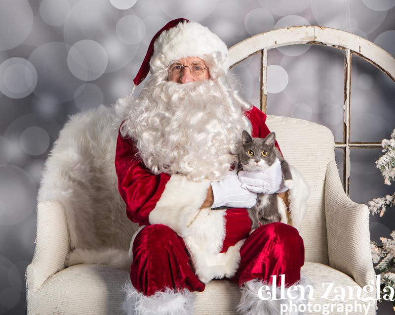 Ellen Zangla Photography, Cat Photographer, Loudoun County
