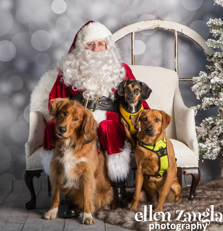 Ellen Zangla Photography, Dog Photographer, Loudoun County, Mixed Breed Dogs