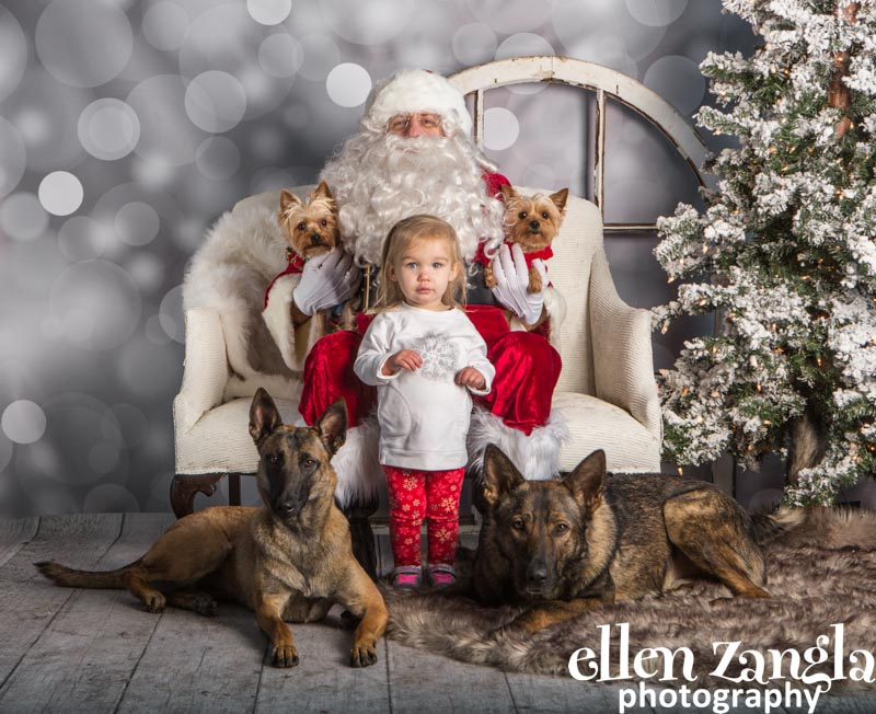 Ellen Zangla Photography, Dog Photographer, Loudoun County, German Shepherd, Belgian Malinois, Yorkies