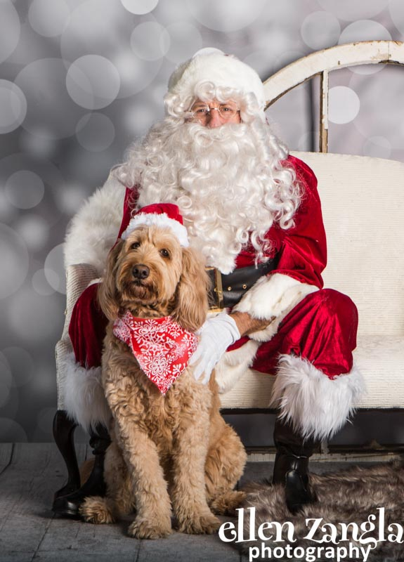 Ellen Zangla Photography, Dog Photographer, Loudoun County, Goldendoodle