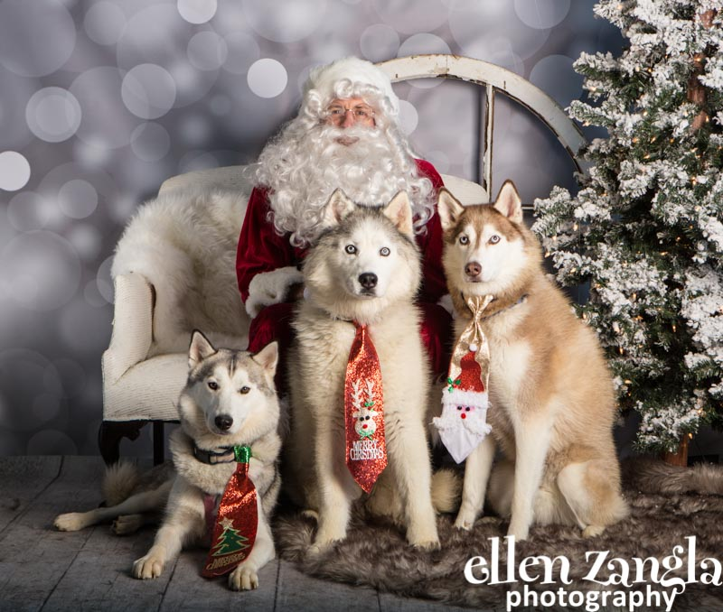 Ellen Zangla Photography, Dog Photographer, Loudoun County, Siberian Huskies