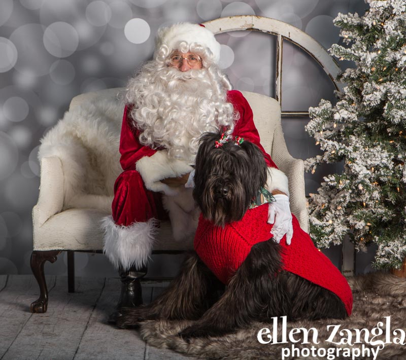 Ellen Zangla Photography, Dog Photographer, Loudoun County, Briard