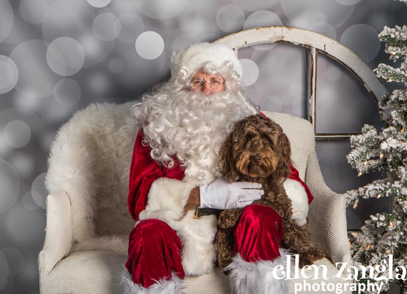 Ellen Zangla Photography, Dog Photographer, Loudoun County, Labradoodle