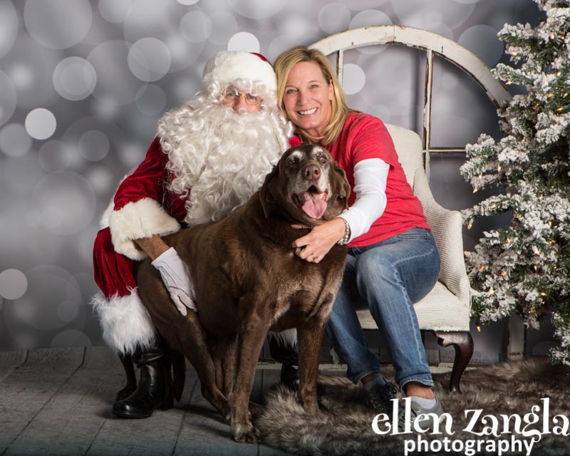 Ellen Zangla Photography, Dog Photographer, Loudoun County, Labrador Retriever