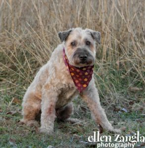Ellen Zangla Photography, Dog Photographer, Loudoun County, Mixed Breed Dog Picture