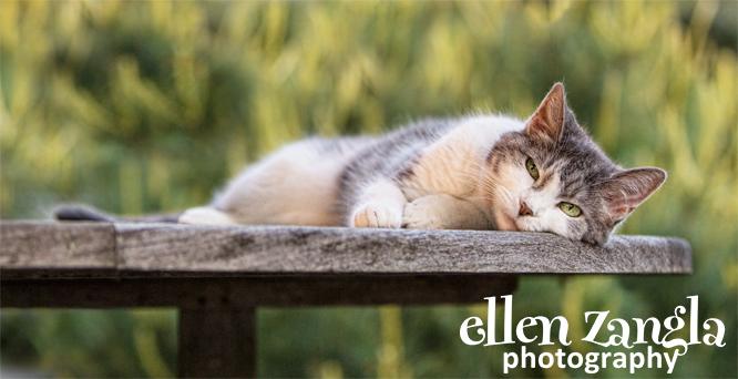 Cat pictures, Ellen Zangla Photography, Loudoun County