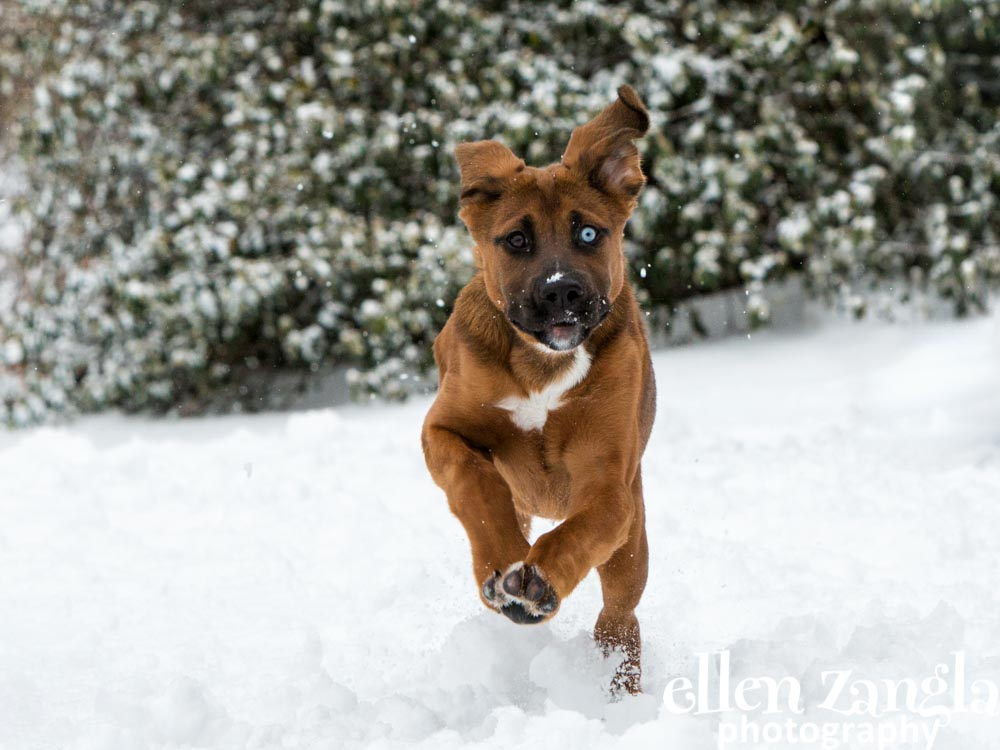 Puppy photo, Dog pictures, Loudoun County, Dog Photographer