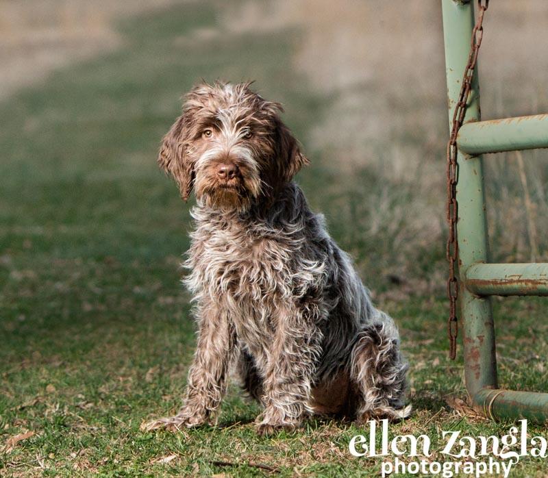 Ellen Zangla Photography, Dog Photographer, Loudoun County, Puppy Pictures
