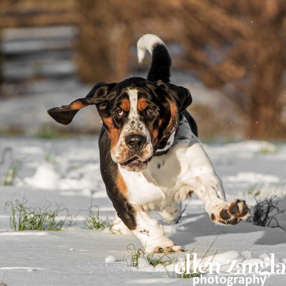 Outdoor dog photo, Ellen Zangla Photography, Loudoun County, Dog photographer
