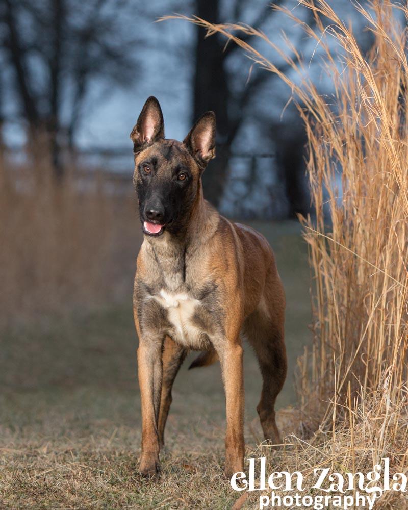 Outdoor dog photography, Ellen Zangla Photography, Professional dog pictures, Loudoun County