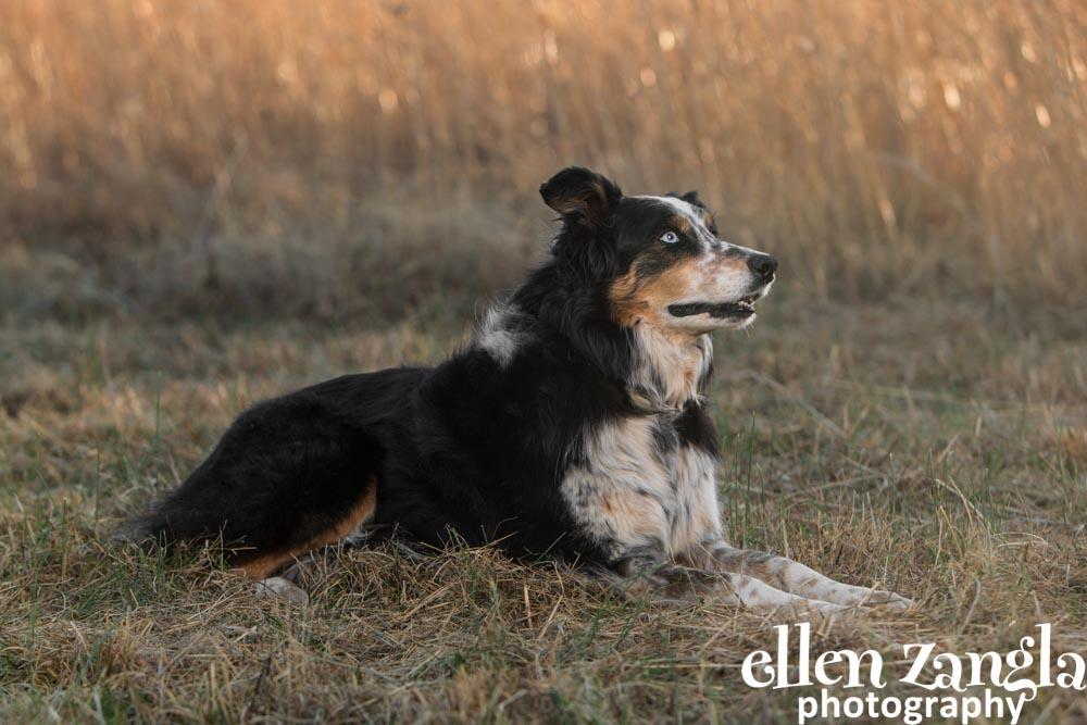 Dog pictures, Dog photographer, Ellen Zangla Photography, Loudoun County