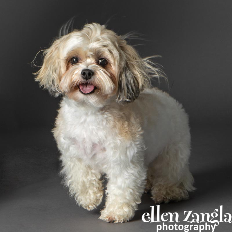 Ellen Zangla Photography, Loudoun County, Dog Photographer
